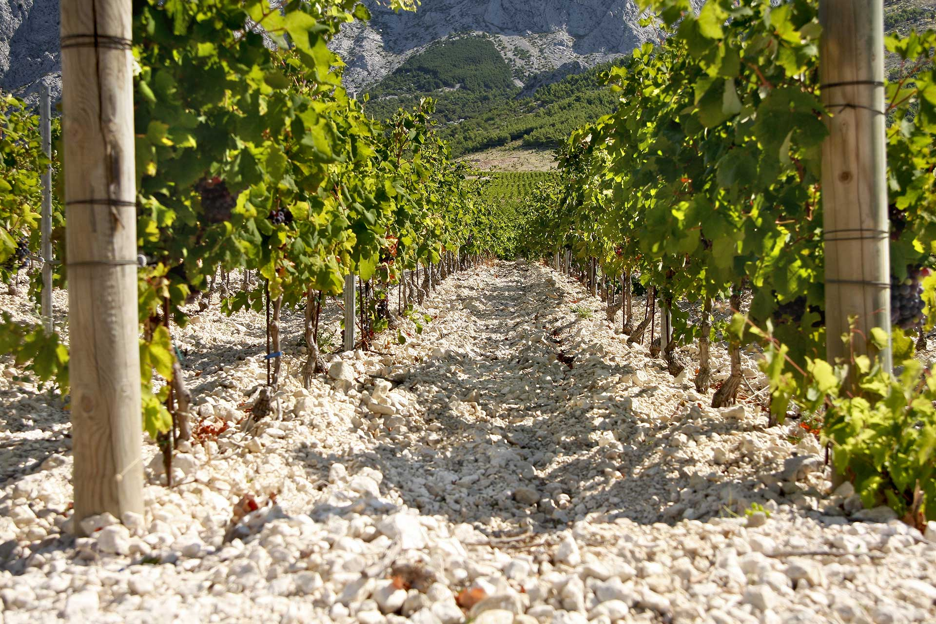 honeymoon in croatia wine tasting tour hvar